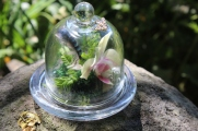 Tiny glass cloche with orchid, feathers and ferns - less than 8cm high